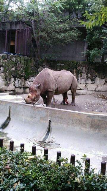 上野動物園西側