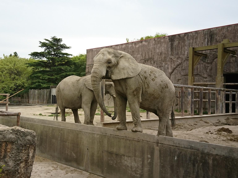 東武動物公園!